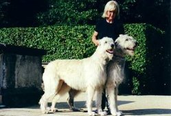 A pair of Irish Wolfhounds